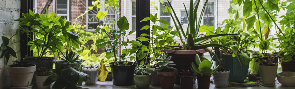5 easy vegetables you can grow indoors
