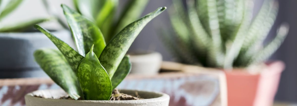 Top 6 Plants for Cleaning Indoor Air